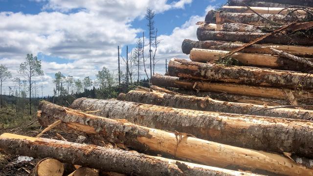 Pourquoi et comment couper des arbres de façon responsable?